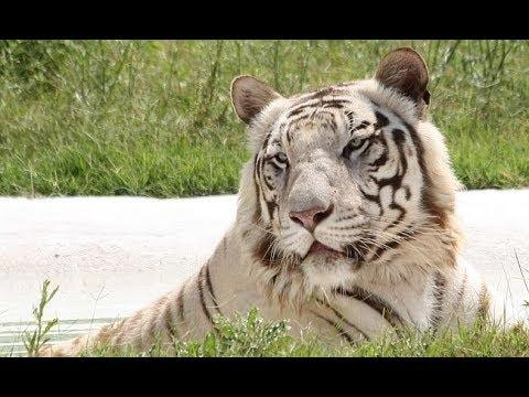 G.P.S. Malkon to Chhatbirh Zoo, Rock Garden Chandigarh tour