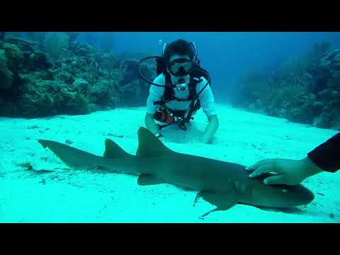 Diving Adventures in Belize: San Pedro & Nurse Sharks