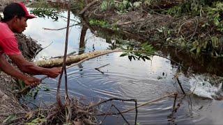 Gambar cover mancing 26 Juni 2019 sungai hutan yang baru di buka