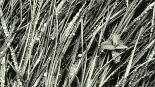 """Robert Schumann - Estudos Sinfónicos Op.13 (Estudo VIII de XII) """"andante"""" - Pedro Burmester"""