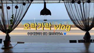 오락가락 Vlog l 치앙마이 우유게스트하우스 패밀리와…