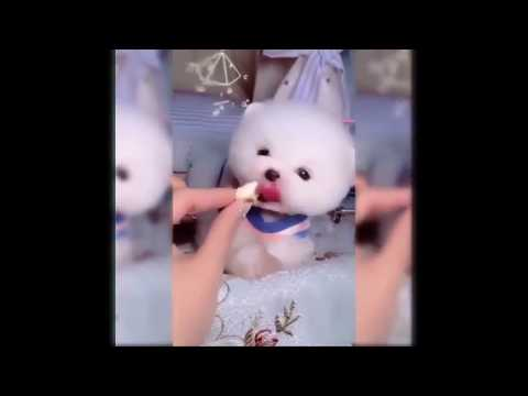 You will have TEARS IN YOUR EYES LAUGHING - The Funniest Dog compilation