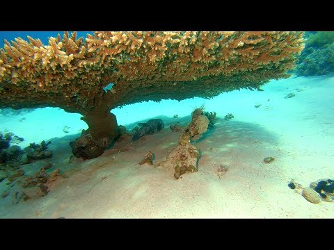 Sharm El Sheikh - Tiran Island - Dives At Gordon And Jackson Reef, June 22nd 2019