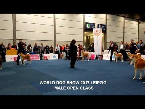 WORLD DOG SHOW 2017 | MALE OPEN #AKITA INU #WDS | GERMANY, LEIPZIG | #WDS2017 #АКИТА ИНУ #秋田 #犬秋田