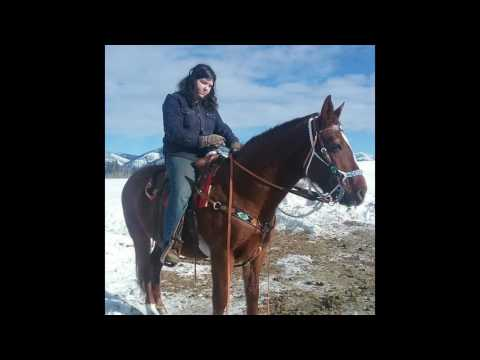 MANDY MILLER RIDING HORSES