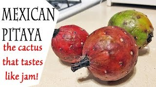 Mexican Pitaya Review (Stenocereus thurberi)  - Weird Fruit Explorer Ep 274