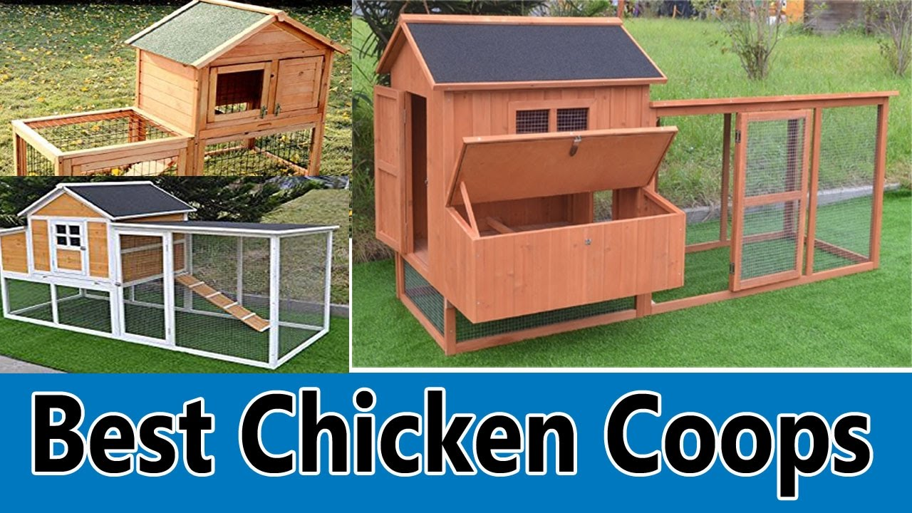 Best Chicken Coops 2019 Top 5 Best Chicken Coops Review