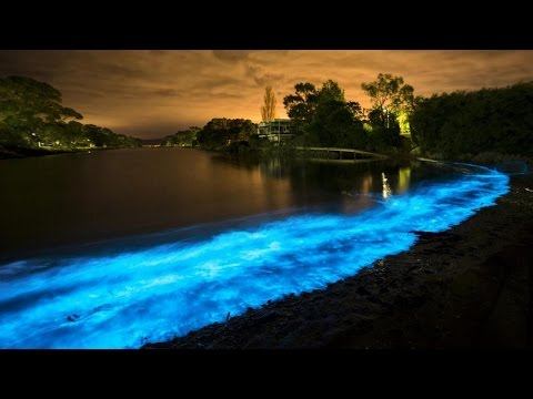 Tasmania Bay: Ghostly blue glow can be a sign of trouble.
