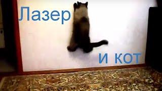 Лазер и кот