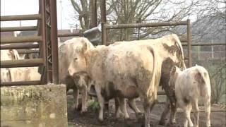 Emission 100% MAG La viande charolaise, la meilleure de France