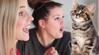 Video OUR NEW BEST FRIEND IS A CAT! download MP3, 3GP, MP4, WEBM, AVI, FLV Januari 2018
