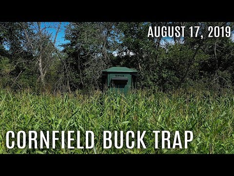 Winke's Blog: Cornfield Buck Trap