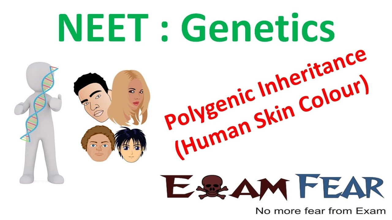 polygenic inheritance in humans