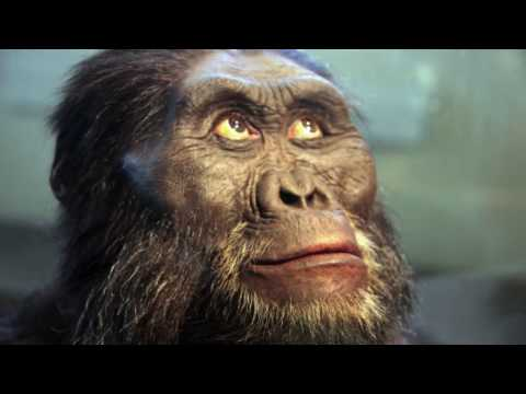 """Is """"Lucy"""" the Australopithecine an Ape-to-Human Transition? (updated)"""