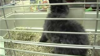 Выбираем кролика . Все О Домашних Животных.