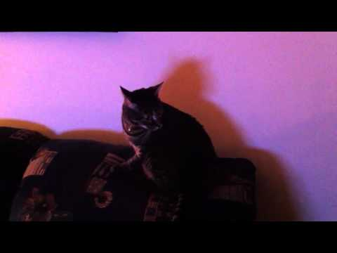 Cat spooked out by sci-fi sound