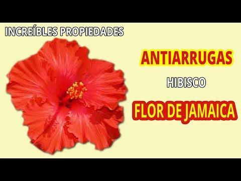 para que se usa solfa syllable flor de jamaica