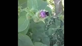 Little Bee named Beyonce