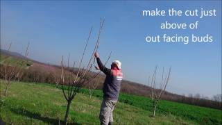 How To Prune 3 Years Old Cherry Tree Simple Steps