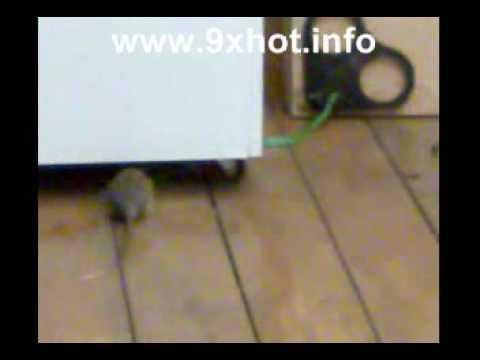chuột ăn rắn
