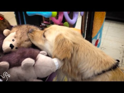Abandoned Dog Picks Out Her First Toy | The Dodo