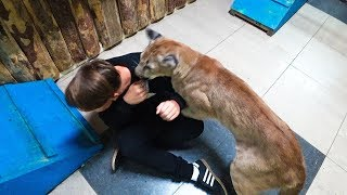 Проникли В Зоопарк. Напала Пума. Школьники Проникают В Зоопарк