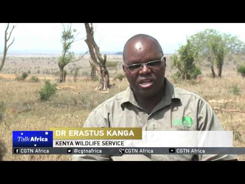 Talk Africa: Protecting Africa's wildlife