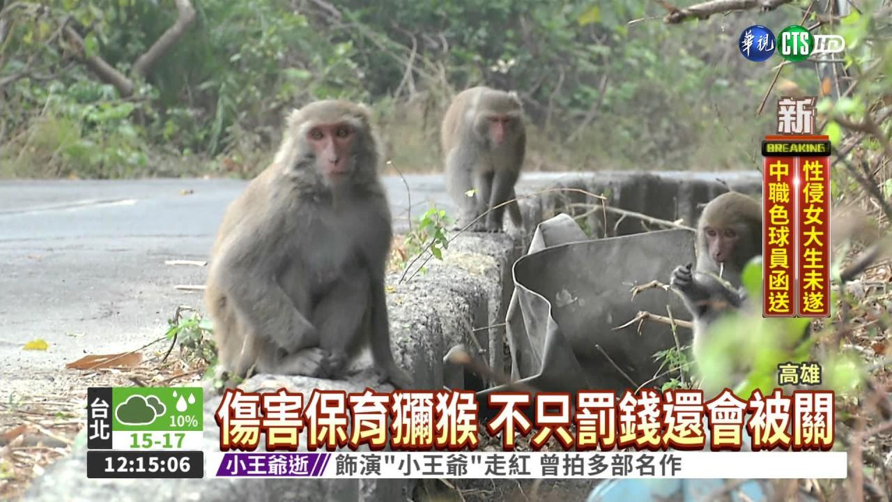 壽山猴遭BB槍襲擊 反攻擊民眾 - YouTube