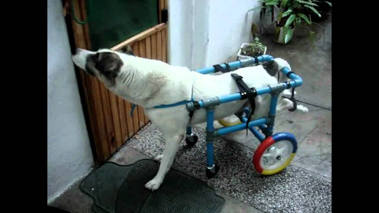 Inti carrito de 4 ruedas para debilidad en patas for Carritos para perros