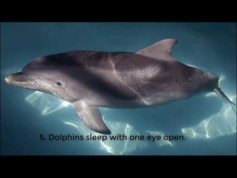 Top 20 interesting things about dolphins