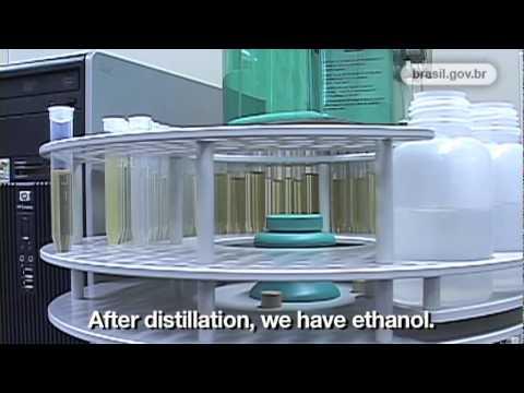 Energy: Cellulosic Ethanol