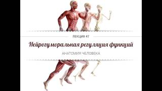 Анатомия. Нейрогуморальная регуляция функций