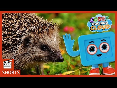Hedgehog And Baby Animal Facts For Kids | Codey And The Cloud S1 Ep2