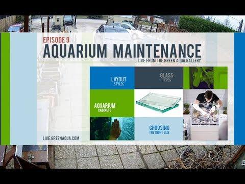 Episode 9:  Aquarium Maintenance