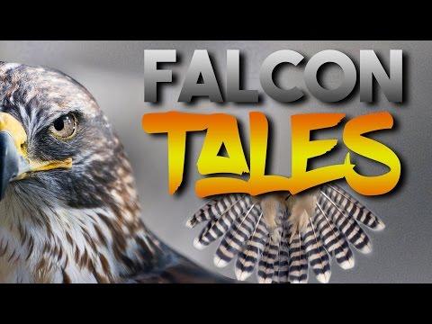Falcon Tales