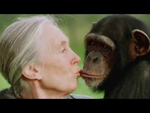 KATIE CLEARY FEATURES JANE GOODALL ON GMOs WORLD ANIMAL NEWS