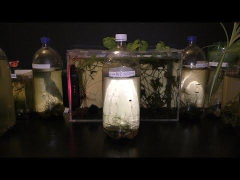 Plastic Bottle Aquarium DIY
