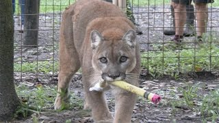 Back To School At Big Cat Rescue