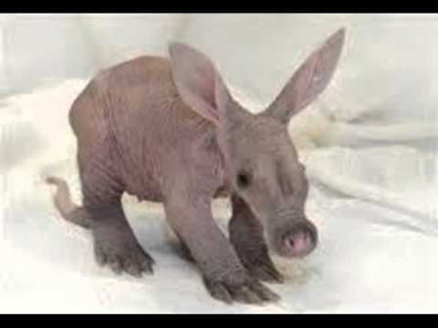 the aardvark song for my friend JDadda