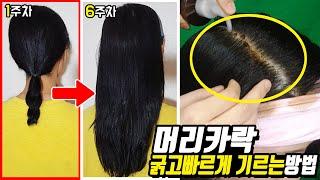 머리카락 빨리 기르는 방법 Hair growth on …