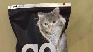 Обзор Корма для кошек и КОТЯТ Go!