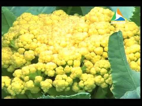 Hazeena's Organic Farm, Ratheesh's Agri Tips | Money watch │Jaihind News@ 15/10/2017