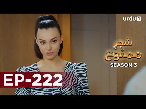 Shajar-e-Mamnu | Episode 222 | Turkish Drama  | Forbidden Fruit | Urdu Dubbing | 15 October 2021