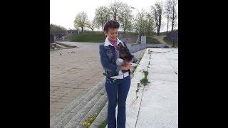 Йорк щенок - Мира и Май Фон играю в парке Минска. Весна 2015г.