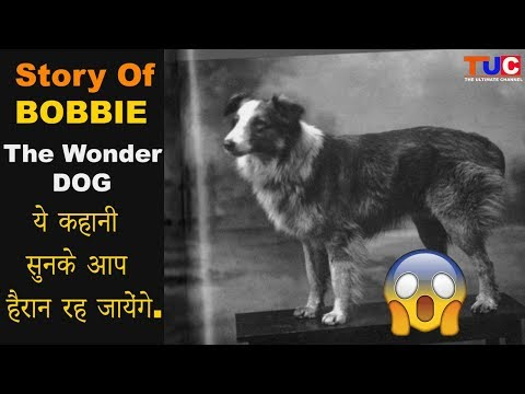 Story Of  BOBBIE, The Wonder Dog : Dog Stories : The Ultimate Channel