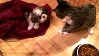 Cat Training: 3 Tips Introducing A Kitten To A New Puppy