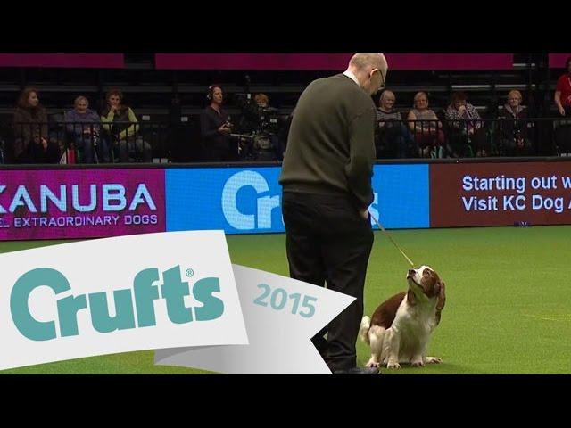 Dog Takes A Dump At Crufts Again Crufts 2015 Youtube