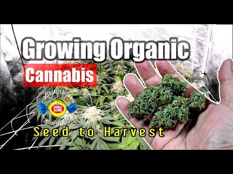 I Grew Organic Cannabis at Home