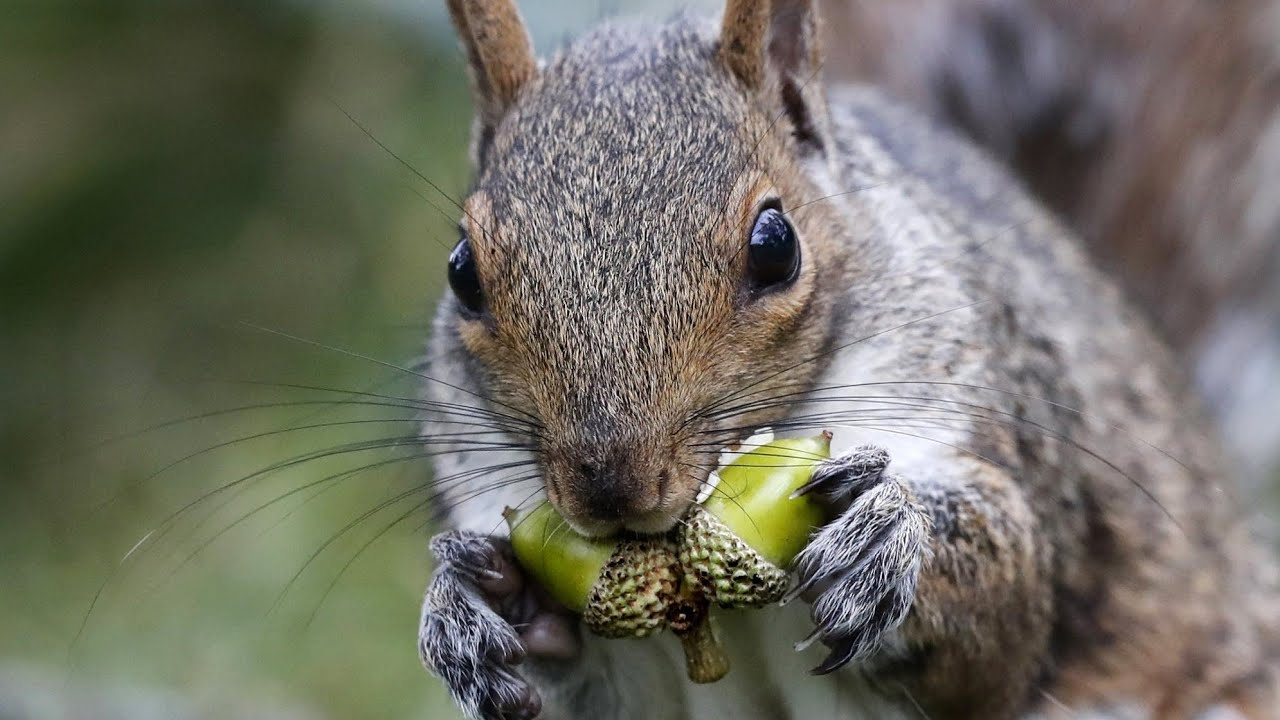 Squirrel power hailed as the latest step in sustainability the guilfordian