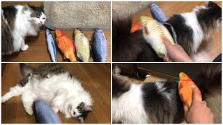 【スパンキング猫】 お尻を魚のおもちゃで叩かれるのが好きな猫 Spanking Cat 保護猫 Ragamuffin